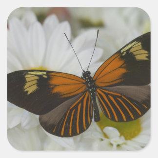 Sammamish Washington Photograph of Butterfly 50 Square Sticker