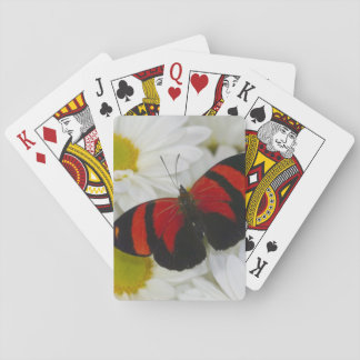 Sammamish Washington Photograph of Butterfly 51 Playing Cards