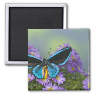 Sammamish Washington Photograph of Butterfly 52 Magnets