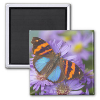 Sammamish Washington Photograph of Butterfly 54 Magnet