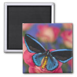 Sammamish Washington Photograph of Butterfly 55 Fridge Magnet