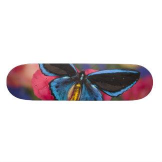 Sammamish Washington Photograph of Butterfly 55 Skateboard Deck