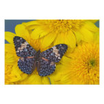 Sammamish Washington Photograph of Butterfly 56