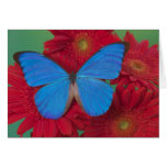 Sammamish Washington Photograph of Butterfly 56 Greeting Card