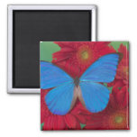 Sammamish Washington Photograph of Butterfly 56 2 Inch Square Magnet