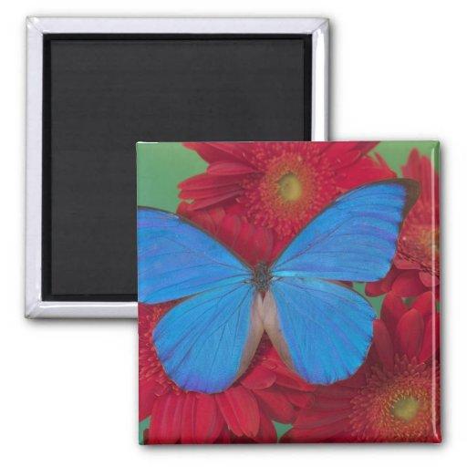 Sammamish Washington Photograph of Butterfly 56 Refrigerator Magnet