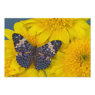 Sammamish Washington Photograph of Butterfly 56
