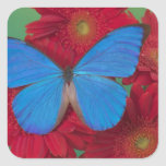 Sammamish Washington Photograph of Butterfly 56 Square Stickers