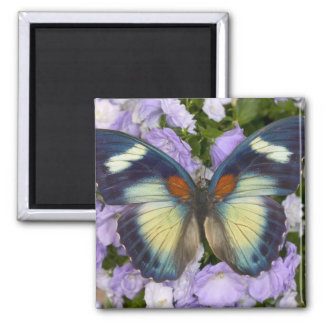 Sammamish Washington Photograph of Butterfly 5 Magnet