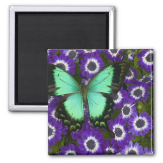 Sammamish Washington Photograph of Butterfly 7 Magnet