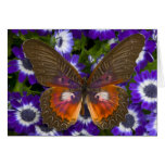 Sammamish Washington Photograph of Butterfly 8 Greeting Cards