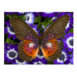 Sammamish Washington Photograph of Butterfly 8 Postcards
