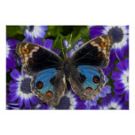 Sammamish Washington Photograph of Butterfly 8 Posters