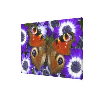 Sammamish Washington Photograph of Butterfly 9 Canvas Print