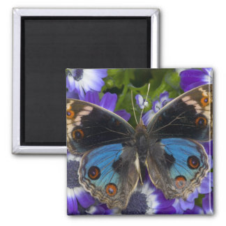 Sammamish Washington Photograph of Butterfly 9 Magnet