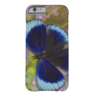 Sammamish Washington Photograph of Butterfly Barely There iPhone 6 Case