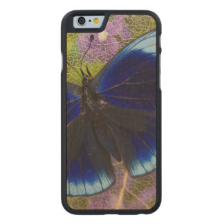 Sammamish Washington Photograph of Butterfly Carved Maple iPhone 6 Case