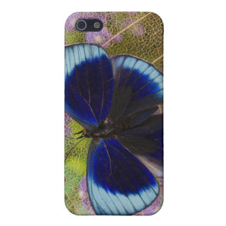 Sammamish Washington Photograph of Butterfly Cover For iPhone SE/5/5s