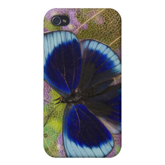 Sammamish Washington Photograph of Butterfly iPhone 4/4S Cases