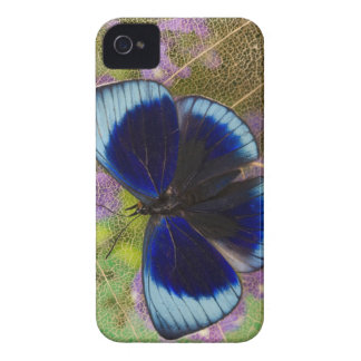 Sammamish Washington Photograph of Butterfly iPhone 4 Cover