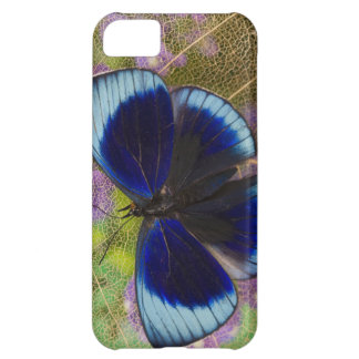 Sammamish Washington Photograph of Butterfly iPhone 5C Cover