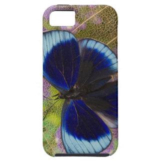 Sammamish Washington Photograph of Butterfly iPhone SE/5/5s Case