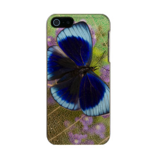 Sammamish Washington Photograph of Butterfly Metallic Phone Case For iPhone SE/5/5s