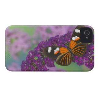 Sammamish Washington Photograph of Butterfly on 10 Case-Mate iPhone 4 Case