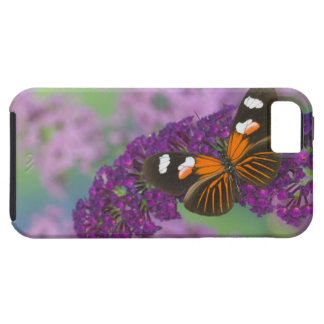Sammamish Washington Photograph of Butterfly on 10 iPhone SE/5/5s Case