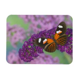 Sammamish Washington Photograph of Butterfly on 10 Magnet