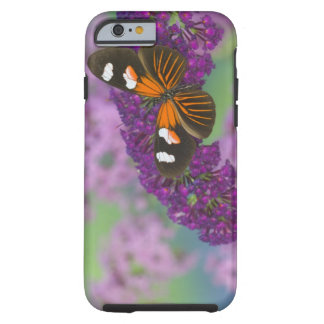 Sammamish Washington Photograph of Butterfly on 10 Tough iPhone 6 Case