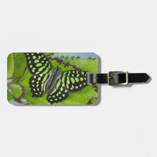 Sammamish Washington Photograph of Butterfly on 11 Bag Tag