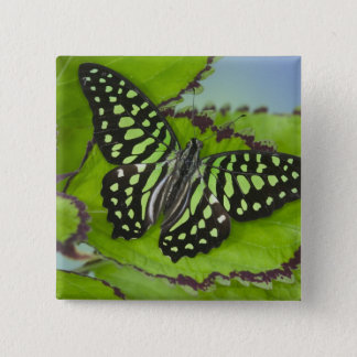 Sammamish Washington Photograph of Butterfly on 11 Button