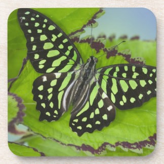 Sammamish Washington Photograph of Butterfly on 11 Drink Coasters