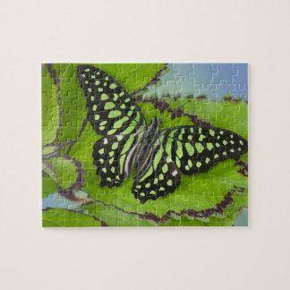 Sammamish Washington Photograph of Butterfly on 11 Jigsaw Puzzle