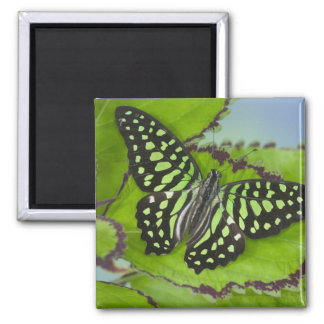 Sammamish Washington Photograph of Butterfly on 11 Refrigerator Magnet