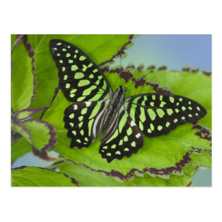 Sammamish Washington Photograph of Butterfly on 11 Postcard