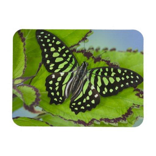 Sammamish Washington Photograph of Butterfly on 11 Rectangular Photo Magnet
