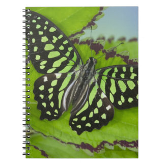 Sammamish Washington Photograph of Butterfly on 11 Spiral Notebook