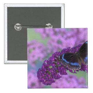 Sammamish Washington Photograph of Butterfly on 12 Button