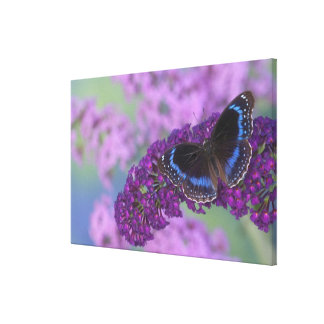 Sammamish Washington Photograph of Butterfly on 12 Canvas Print