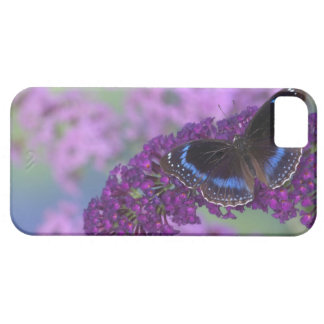 Sammamish Washington Photograph of Butterfly on 12 iPhone 5 Cover