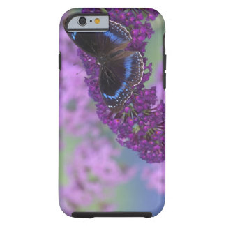 Sammamish Washington Photograph of Butterfly on 12 iPhone 6 Case
