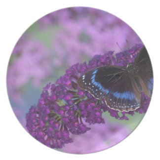Sammamish Washington Photograph of Butterfly on 12 Melamine Plate