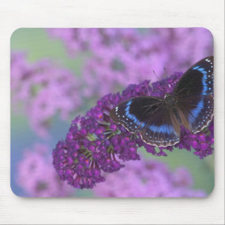 Sammamish Washington Photograph of Butterfly on 12 Mouse Pad
