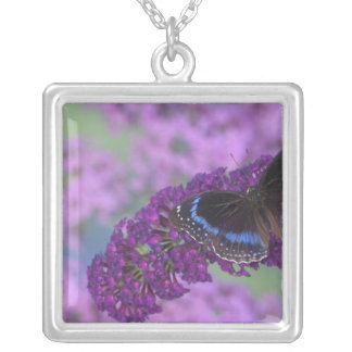 Sammamish Washington Photograph of Butterfly on 12 Custom Jewelry