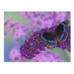 Sammamish Washington Photograph of Butterfly on 12 Postcard