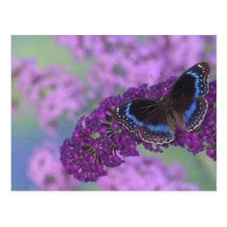 Sammamish Washington Photograph of Butterfly on 12 Postcard