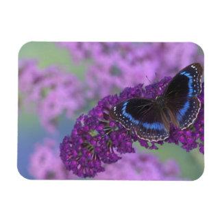 Sammamish Washington Photograph of Butterfly on 12 Vinyl Magnets