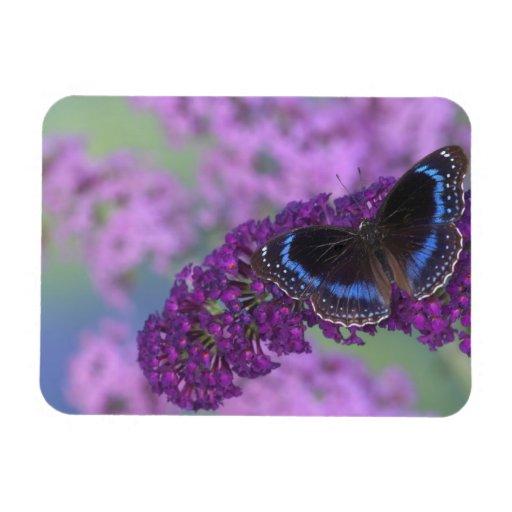 Sammamish Washington Photograph of Butterfly on 12 Rectangular Photo Magnet